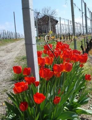 """""""Rocche dell'Annunziata"""" in primavera"""