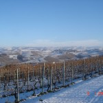 Vineyards under snow