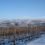 I nostri vigneti con la neve
