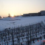 The wineyards in winter