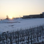 Le vigne in inverno