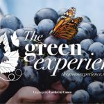 THE GREEN EXPERIENCE
